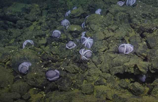 colonia de pulpos