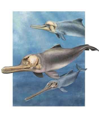 antiguos delfines de hocicos largos