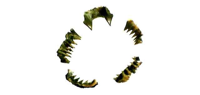 dientes antiguos de lamprea