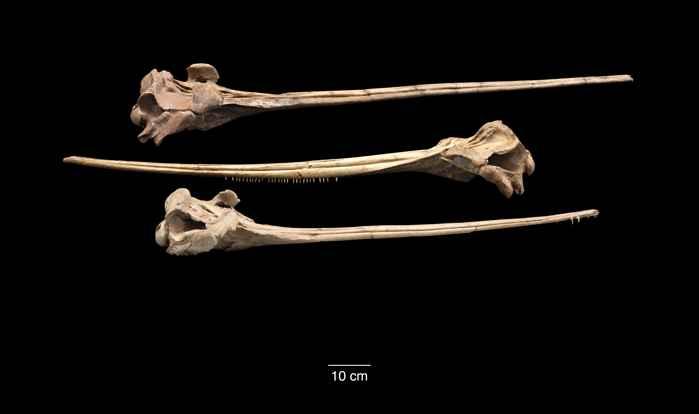 fósiles de hocicos de antiguos delfines