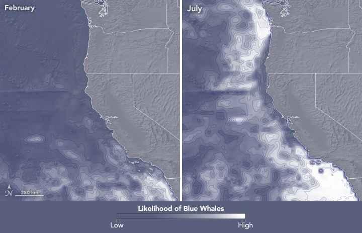variables ambientales para la ballena azul en julio y febrero
