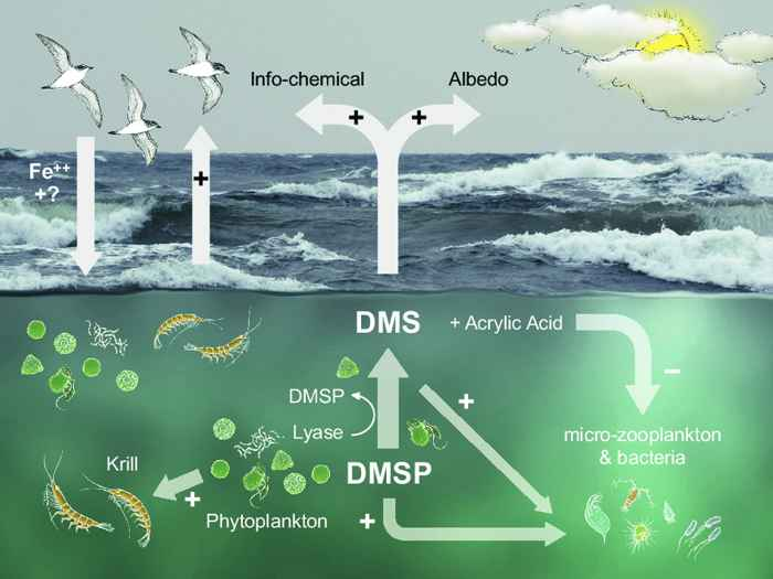 DMS y fitoplancton