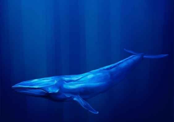 ballena azul canto
