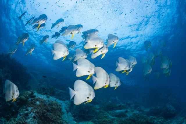 banco de peces bajo la luz