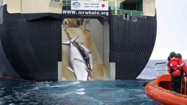 carga de una ballena en un buque ballenero