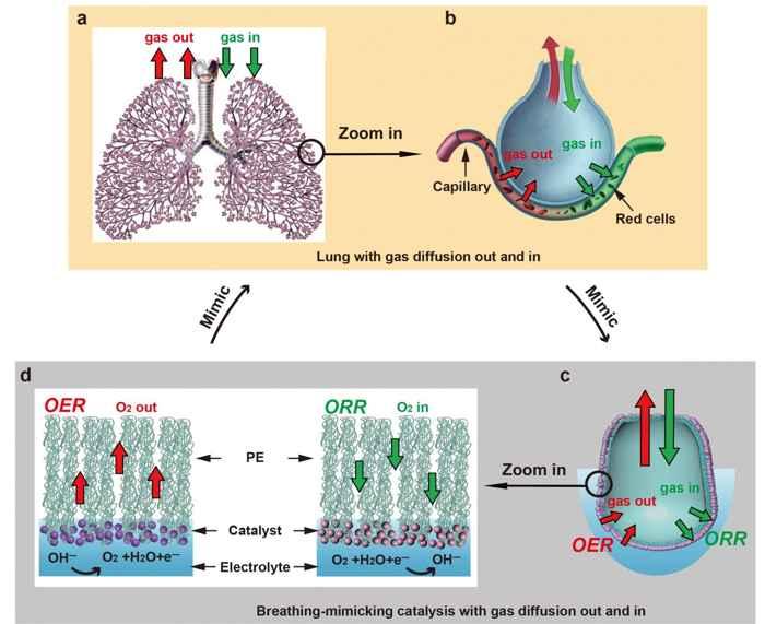 dispositivo similar a pulmones para combustible