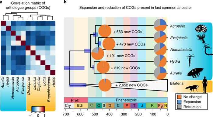 expansión genética de las cnidarias