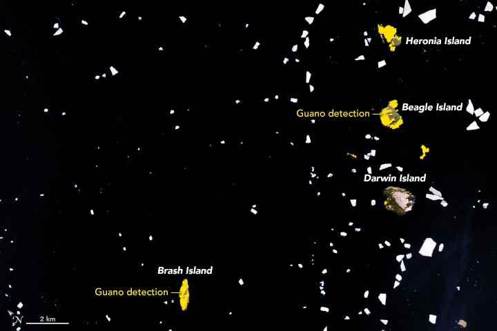 guano de pingüinos desde satélite