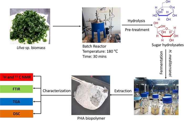 microbios producen bioplásticos