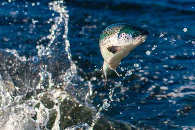 pez saltando