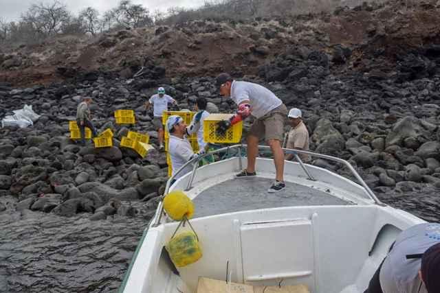 repoblación de la iguana terrestre de Galápagos