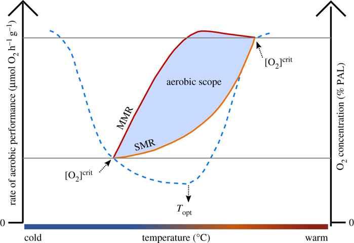 relación entre temperatura y oxígeno