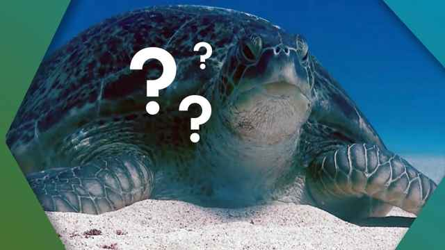 caparazón de una tortuga