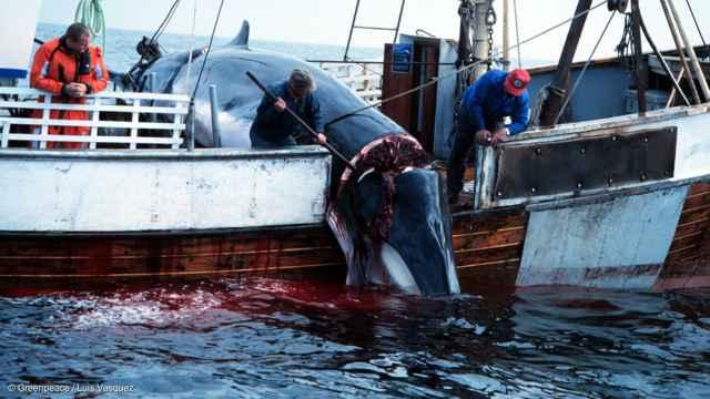 caza de ballenas por Noruega