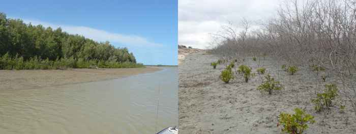 daños en bosques de manglares