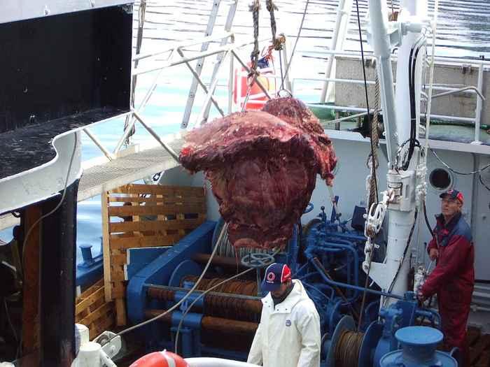 descarga de carne de ballena de un barco de Noruega
