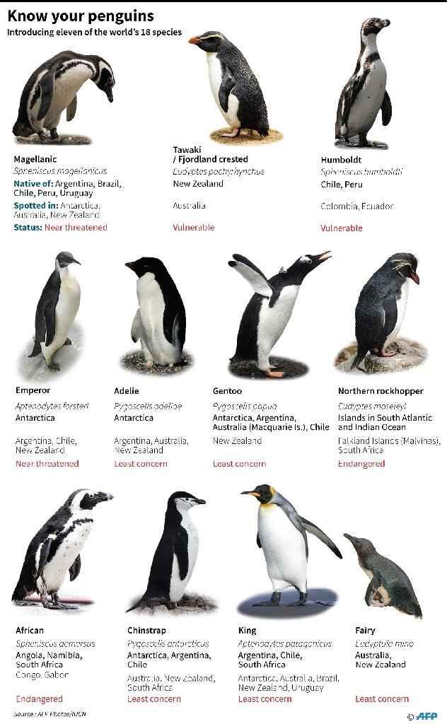 especies de pingüinos