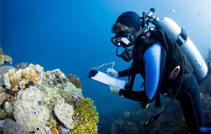 estudio de un arrecife de coral