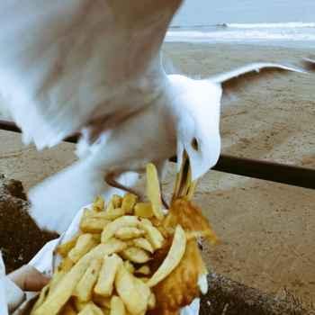 gaviota con unas patatas fritas