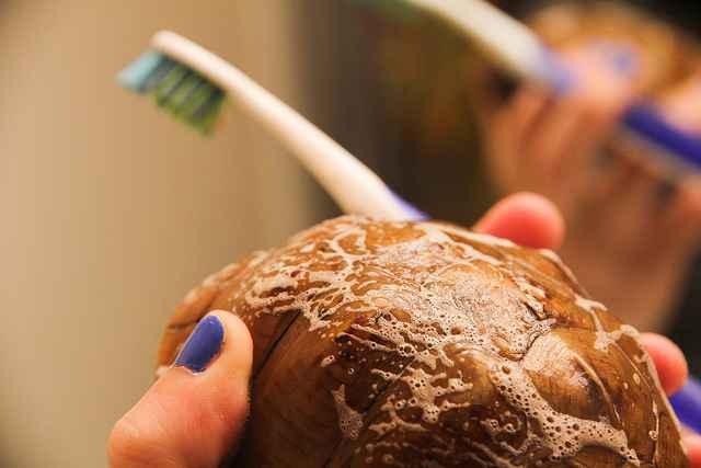limpieza del caparazón de una tortuga