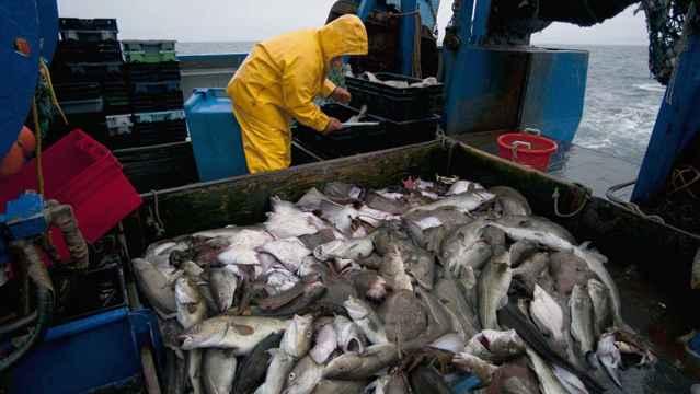aumenta el nivel de mercurio en los peces