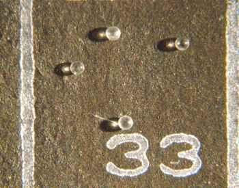microtektitas en fósiles de almeja
