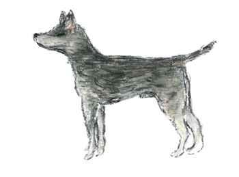 perro fundador del CTVT