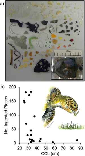 piezas de plástico en una tortuga verde