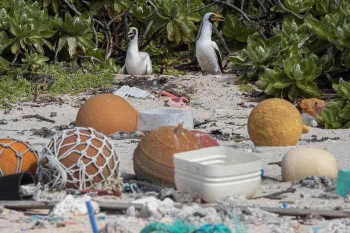 plásticos en la Isla Henderson