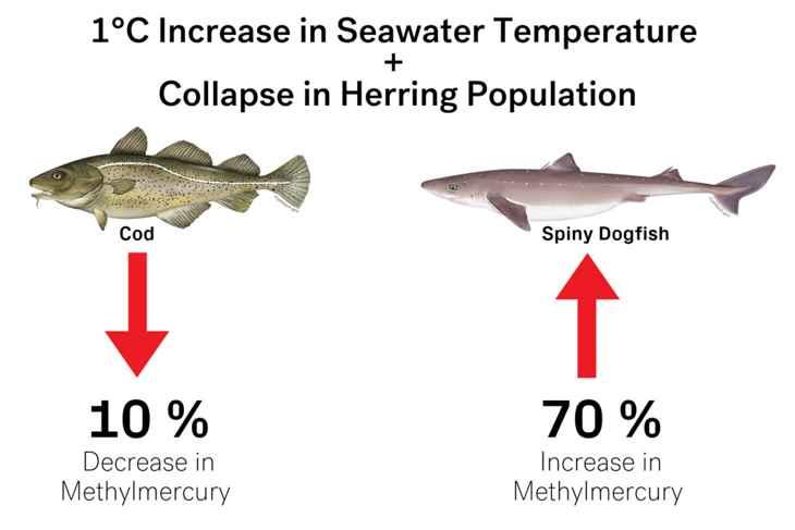 simulaciones de niveles de mercurio