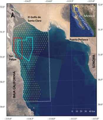 vaquita marina, distribución