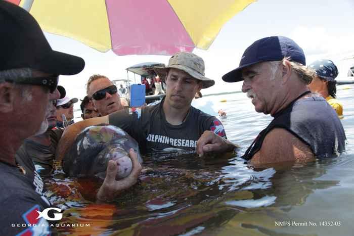 Gregory Bossart marcando un delfín