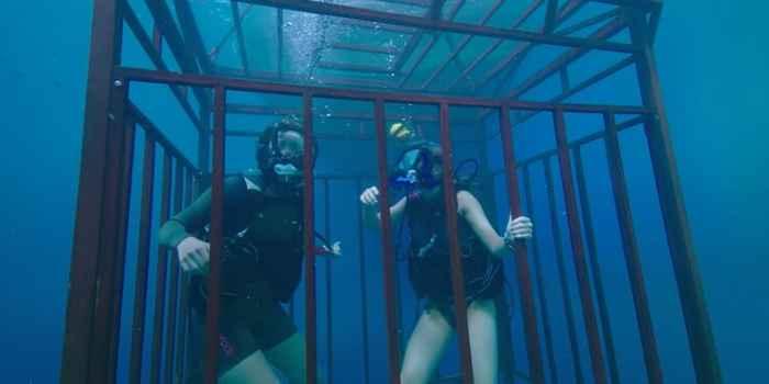 película A 47 metros, jaula de tiburones