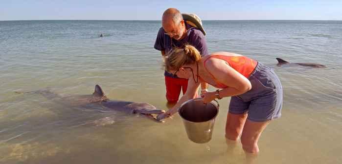 alimentación de delfines por ecoturismo