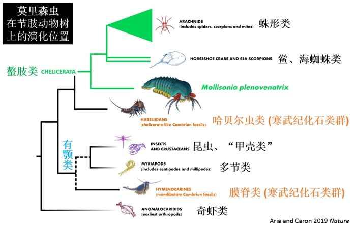 árbol de vida del Mollisonia plenovenatrix