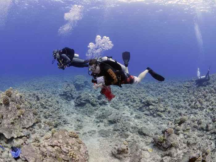 corales dañados por la bacteria