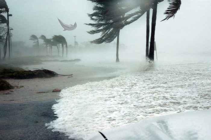 delfín arrastrado por el huracán Dorian