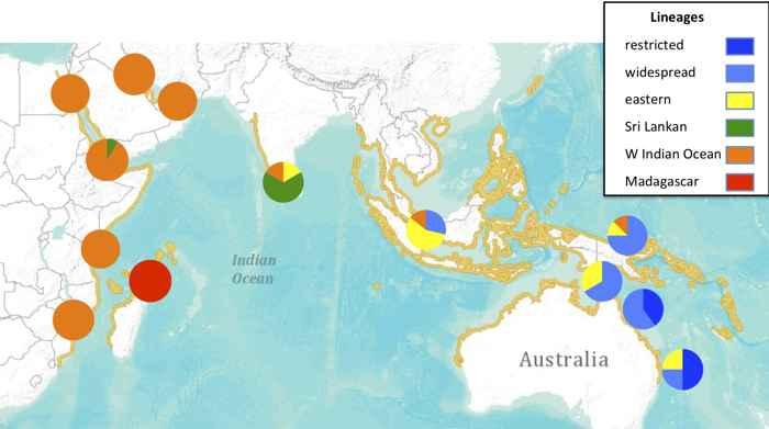 distribución del dugongo