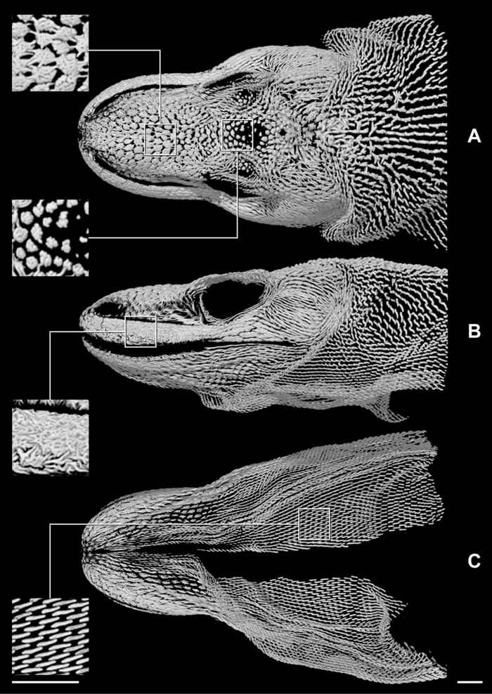 escaner del dragón de Kocomodo