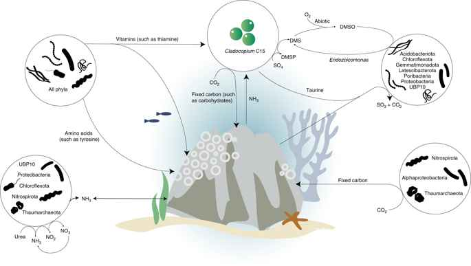 interacciones con el coral