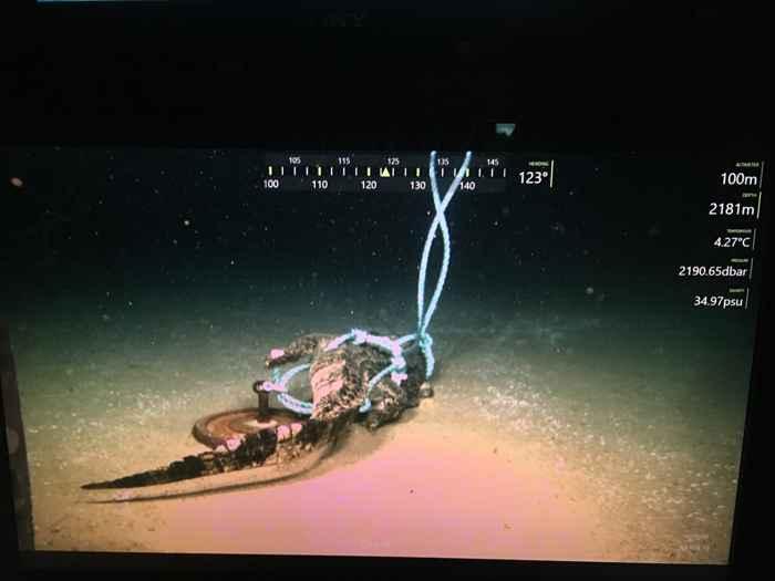 isópodos gigantes devoran un cocodrilo