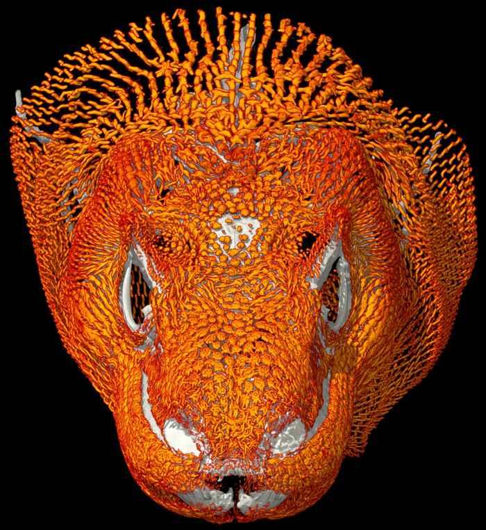osteodermos en la cabeza del dragón de Komodo