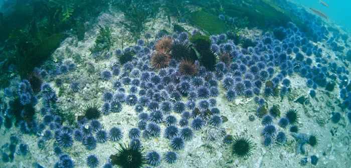 páramo de erizos de mar