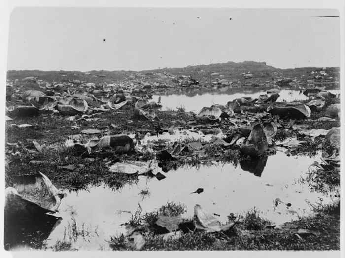 restos de tortugas de Galápagos