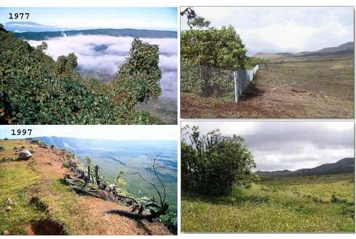vegetación antes y después de erradicar las cabras