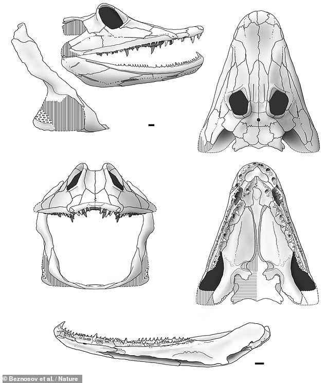cráneo de Parmastega aelidae