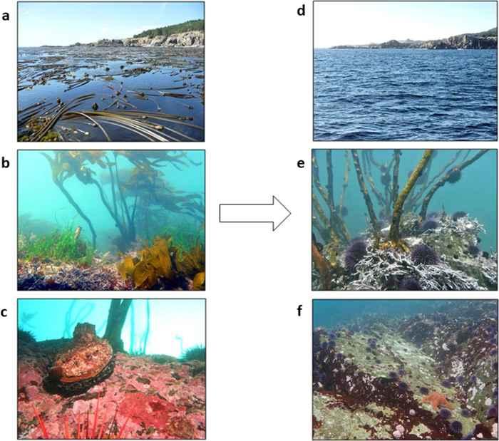 cambios en el ecosistema de algas marinas