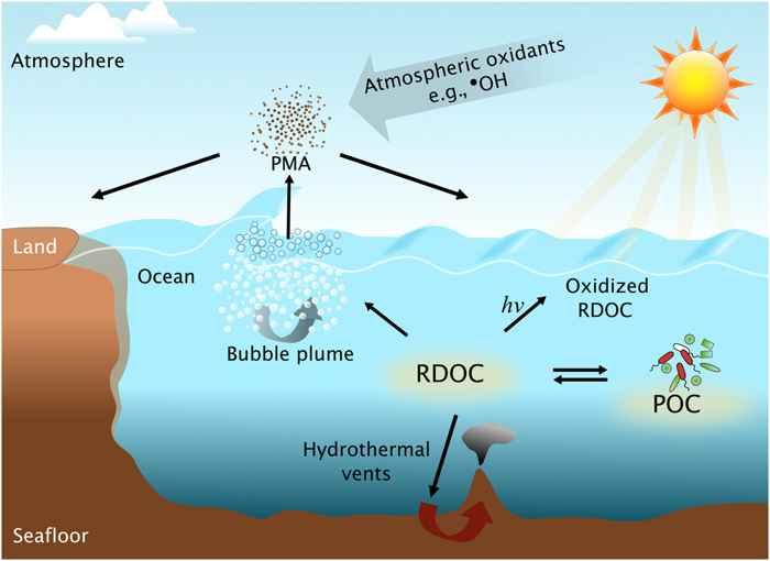 ciclo del carbono orgánico marino disuelto