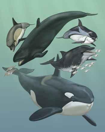 cetáceos