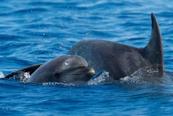delfín herido de bala en la cabeza